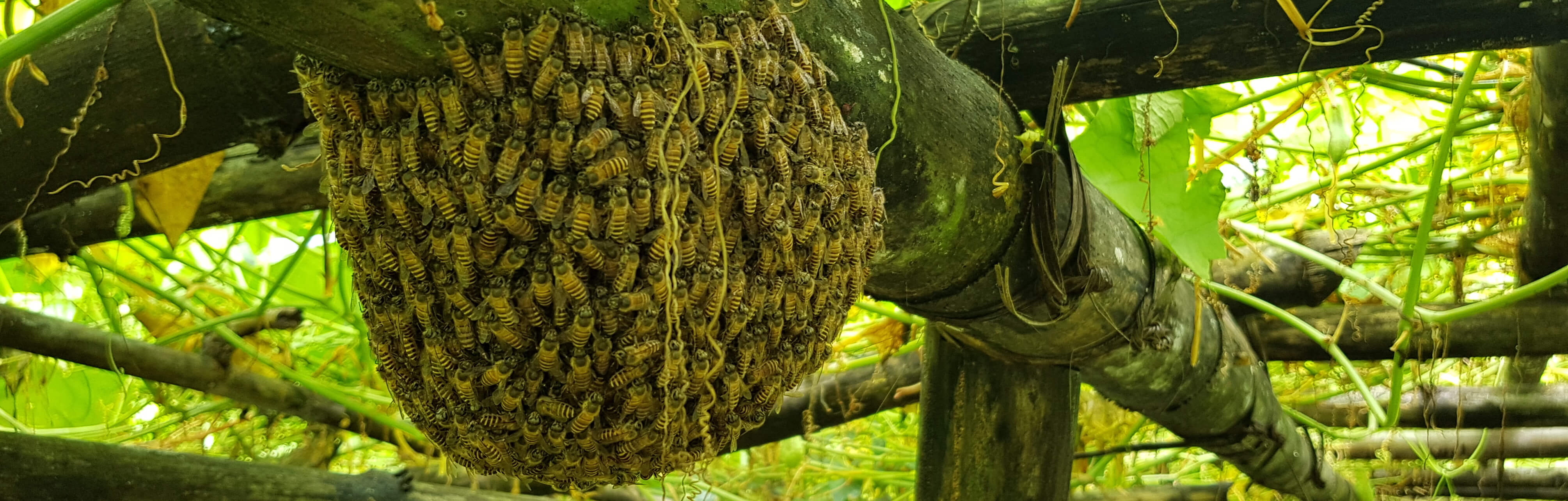 Bees on Bamboo